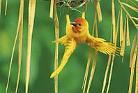 Постер Желтая птичка 1581