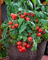 Томат декоративный Red Robin F1, Sakata 1 000 семян