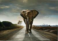 Фотообои  на стену с плотной бумаги Слон размер 196 х 272 см