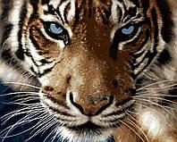 Картина раскраска по номерам без коробки Взгляд тигра (BK-GX8767) 40 х 50 см