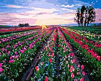 Картина раскраска по номерам без коробки Тюльпановое поле (BK-GX8819) 40 х 50 см