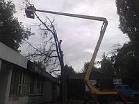 Удаление деревьев Киев (044) 531 88 75