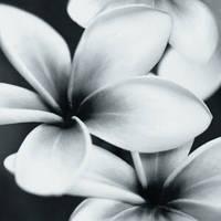 PRET-A-PORTER BLACK FLOWER COMPOSITION декор3 750*750