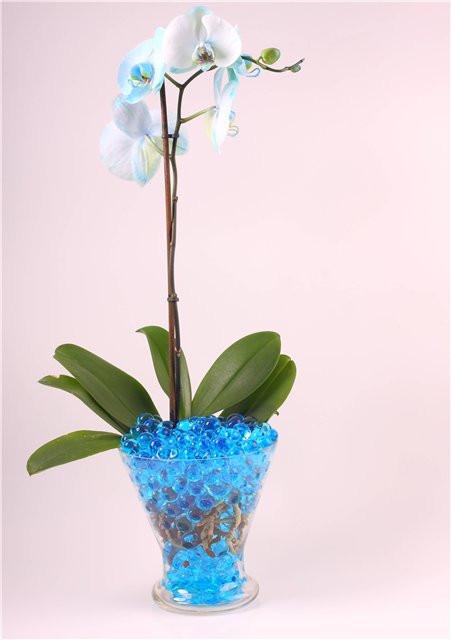 гидрогель для цветов