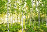 Фотообои флизелиновые на стену 368х254 см 8 листов: Солнечно. Komar 8NW-519