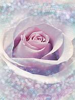 Фотообои флизелиновые на стену 184х248 см 2 листа: Лиловая роза. Komar XXL2-020