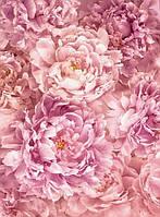 Фотообои флизелиновые на стену 184х248 см 2 листа: Пион розовый. Komar XXL2-009