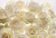 Фотообои 3D флизелиновые на стену 368х248 см 4 листа: Белые розы. Komar XXL4-007