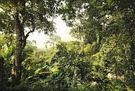 Фотообои флизелиновые на стену 368х248 см 4 листа: Джунгли. Komar XXL4-024