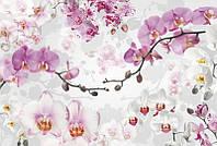 Фотообои флизелиновые на стену 368х248 см 4 листа: Орхидеи. Komar XXL4-032