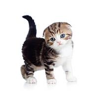 Royal canin корм для котят