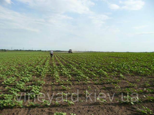 купить удобрения в Запорожской области, минеральное питание, азот, фосфор, калий , бор