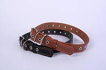 Collar (Колар) Повідки, нашийники для собак. Україна
