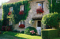 Украсим дом цветами и зеленью!