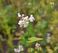 Трава-мурава, цветочки-лютики и собака-барабака