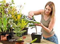 Удобрения для комнатных цветов