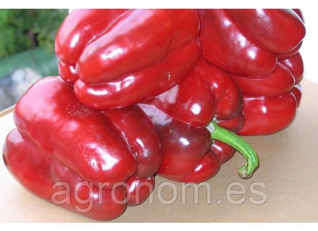 Насіння перцю солодкого Клаудіо F1 1000 насінин Nunhems