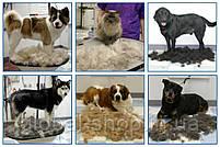 Щетка для груминга крупных собак Furminator deShedding tool Large Фурминатор Fubnimroat лезвие 10,16 см, фото 5