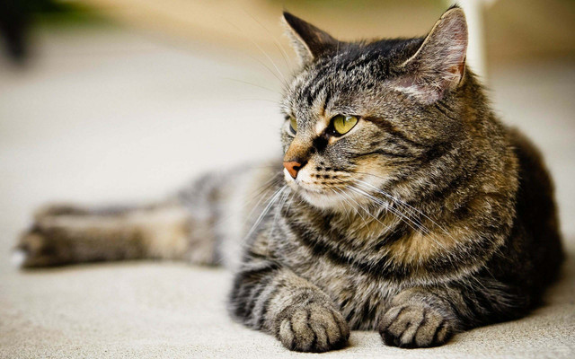 Корм для стерилизованных кошек Purina Cat Chow Special Care Sterilized