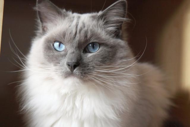 Корм для кошек с чувствительным пищеварением Purina Cat Chow Special Care Sensitive