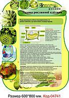 """Стенд пластиковий біологія """"Будова рослинної клітини"""" Код-04741"""