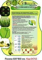 """Стенд пластиковий біологія """"Життєдіяльність клітини"""" Код-04742"""