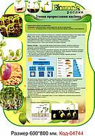 """Пластиковый стенд """"Умови проростання насіння"""" Код-04744"""