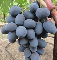 Саженцы винограда  фуршетный
