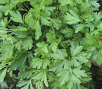 Семена Петрушка листовая Гиганте де Италия (Фасовка: 1 г)