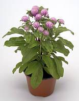 Гомфрена Будди (Фасовка: 200 шт; Цвет: розовый)