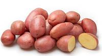 Картофель Моцарт (Фасовка: 5 кг; Цвет: красный)