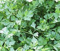 Семена Петрушка Риалто (Фасовка: 50 г)