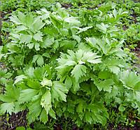 Семена Любисток (Фасовка: 0,1 г)