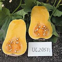 Семена Тыква UG 205 F1 (Фасовка: 1 000 шт)