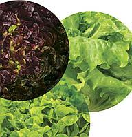 Семена Салатный микс Здоровый завтрак (Фасовка: 30 шт)