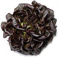 Семена Салат Гоген (Фасовка: 1 000 драж)