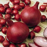 Семена Лук севок  Ред Барон (Фасовка: 1 кг)