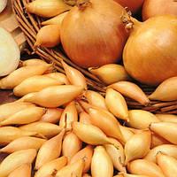Семена Лук севок Стурон (Фасовка: 1 кг)