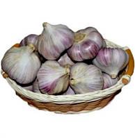 Семена Чеснок Гермидор (Фасовка: 1 кг)