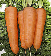 Морковь Курода Шантане (Фасовка: 10 г)