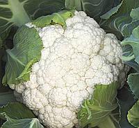 Семена Цветная капуста Опал (Фасовка: 20 шт)