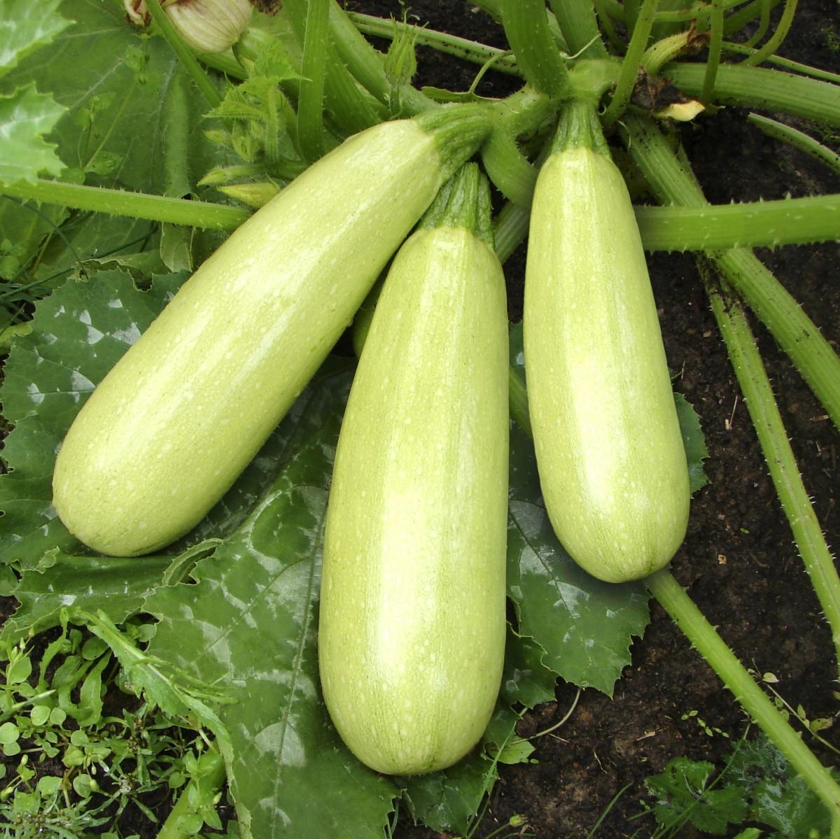 картинки семена кабачков кроссовки, украшенные