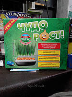 """Домашняя установка для выращивания зеленого лука """"Чудорост"""""""