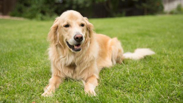 Корм для пожилых собак средних пород с ягнёнком и рисом Нills Mature Adult 7+ Medium Active Longevity Lamb