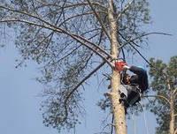 Удаление деревьев. Корчевание пней. Обрезка веток. Спил деревьев. Вывоз листьев и веток