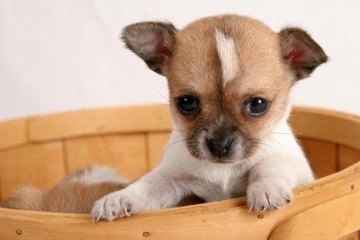 Корм для щенков мини-пород Hills Puppy Small and Miniature