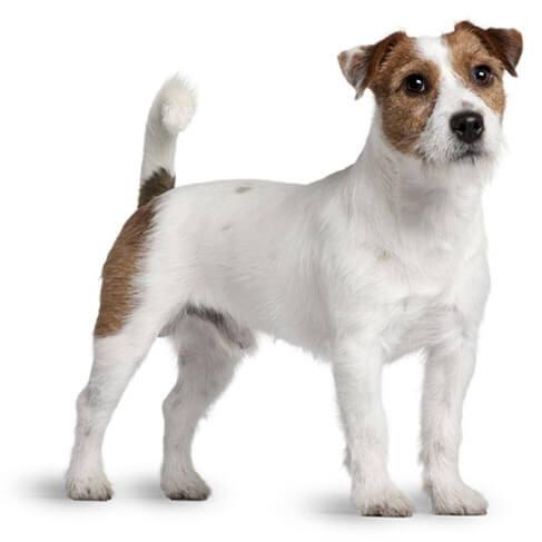 Корм для собак с чувствительной кожей Hills Adult Sensitive Skin