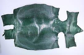Шкура ящірки (варана) темно-зелена