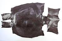 Шкура ящерицы (варана) коричневая, фото 1
