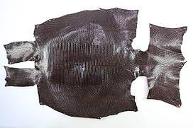 Шкура ящірки (варана) коричнева
